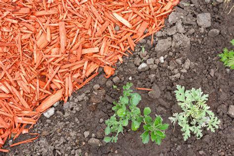 best type of mulch landscapers talk local blog talk local blog