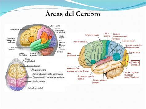 Lc Neo Med y cerebro espa ol tudo que voc 234 queria saber sobre a