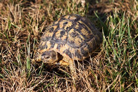 allevare animali da cortile gli animali dell agriturismo poggio diavolino di suvereto