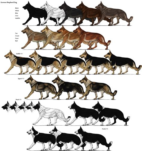 puppy color calculator image german shepherd color chart png herding farms wikia fandom