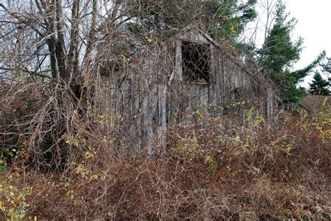 nature weedy assaults  abandoned buildings