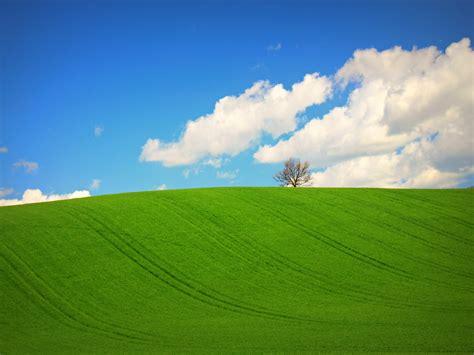 Imagenes De Verdes Praderas | hermosa pradera verde hd 1280x960 imagenes wallpapers