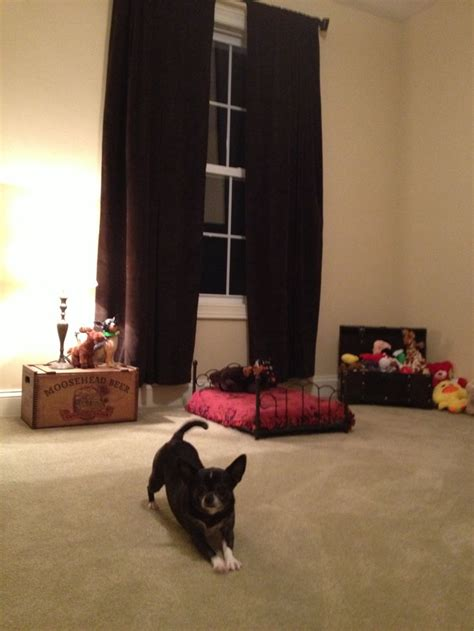dog bedroom dog bedroom dog stuff pinterest dog bedroom