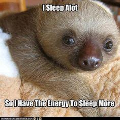 Baby Sloth Meme - clean sloth memes on pinterest funny pictures hilarious
