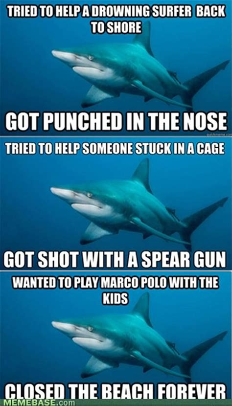 shark meme pictures dump a day shark meme