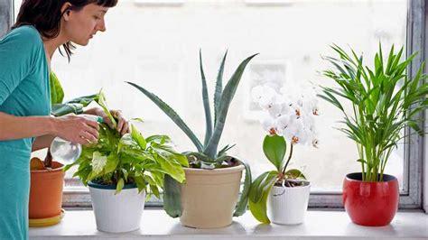 enfermedades de las plantas de interior plantas de interior tipos variedades cuidados y riego