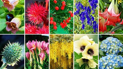 die zehn giftigsten pflanzen aus deutschen g 228 rten welt