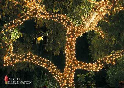 evergreen tree light wrap tree wrapping and tree lighting mobile illumination