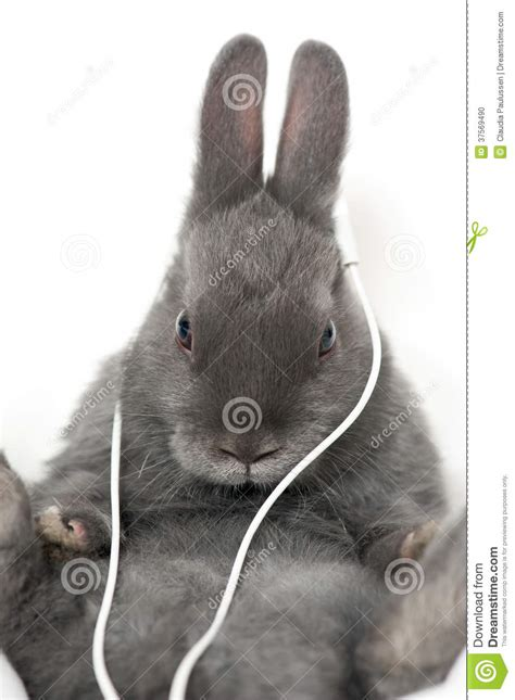 Rabbit Earphone With bunny with earphones stock photo image 37569490