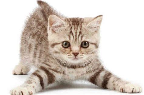 un gato y un 0735818355 los beneficios de tener un gato