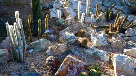 botanical gardens in tucson tucson botanical gardens in tucson arizona expedia