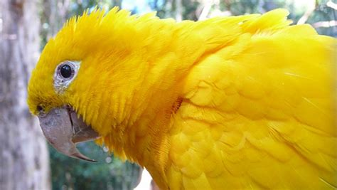 bright yellow bird flickr photo sharing
