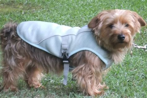 why do dogs always want food ruff wear sw cooler vest the canine chef cookbook