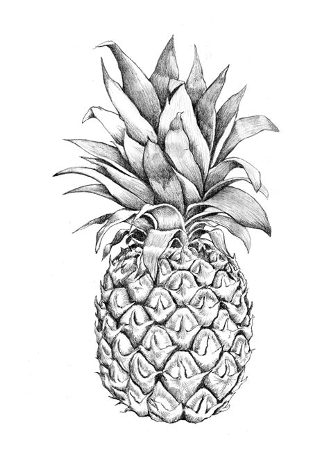 images for gt pineapple graphic design pineapples