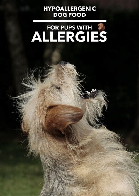 food for dogs with allergies hypoallergenic food dogs allergies