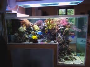 Collection of Unique Aquariums   Reef Central Online Community