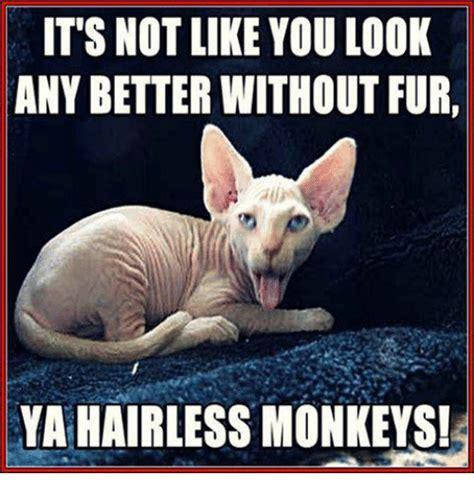 hairless cat meme 25 best memes about hairless monkey hairless monkey memes