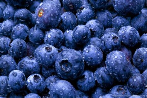 blueberries for dogs types of berries that dogs can eat and can t eat 187 teacupdogdaily