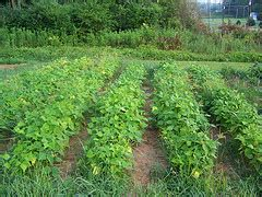 creating a vegetable garden from scratch creating a vegetable garden plot from scratch