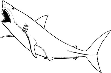 baby shark coloring pages prev next baby great white shark coloring pages bedroom