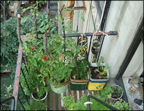 Apartment Vegetable Garden by Expert Wood Working Apartment Vegetable Garden Ideas