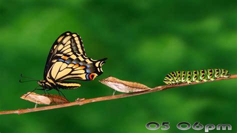 download fantastic butterfly screensaver animated free wallpapers and screensavers butterflies wallpapersafari