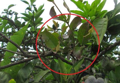 tesis adalah dan contohnya pengertian tumbuhan parasit epifit saprofit dan