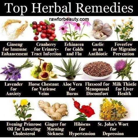 medicinal herb chart herbalism medicine top herbal remedies herbs pinterest