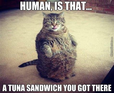 Fat Cat Meme - crazy cat lady funny meme photo