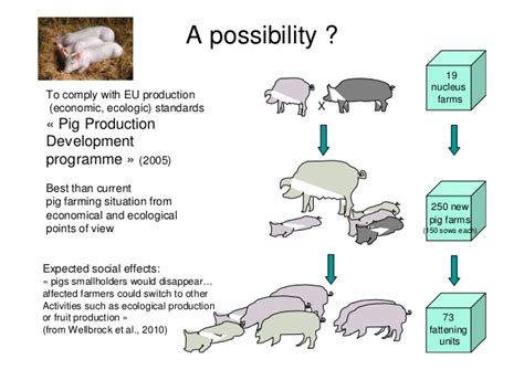 sle business plan on pig farming setting the boundaries for social lca in comparison with