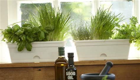 Kitchen Bench Herb Garden Fertilizer Herb Plants For Kitchen 936 Hostelgarden Net