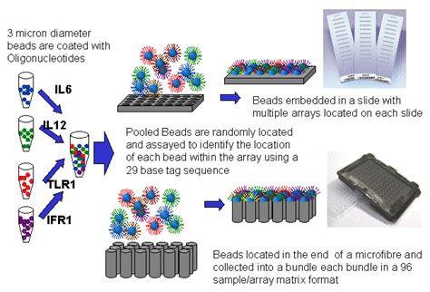 illumina microarray image gallery illumina beadchip