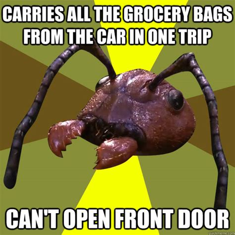 Ants Meme - carries all the grocery bags from the car in one trip can