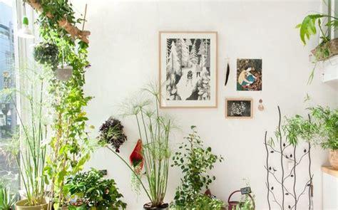 tips memilih tanaman hias indoor  tepat desain