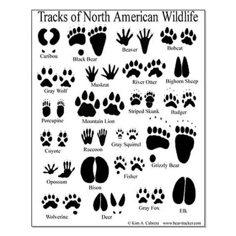 test animale guida animal tracks guide posters