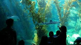 Home Aquarium by Family Fun Adventure Birch Aquarium At Scripps La Jolla