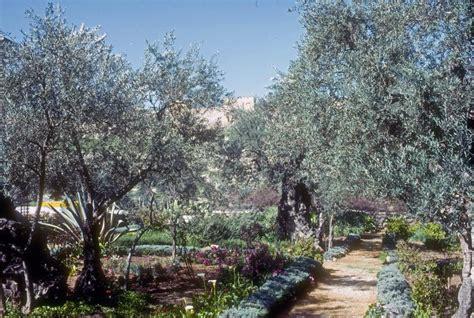 Garden Of Today The Garden Of Gethsemane Today Photo Robert L Grupp