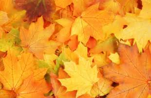 autumn leaves textures download photo background