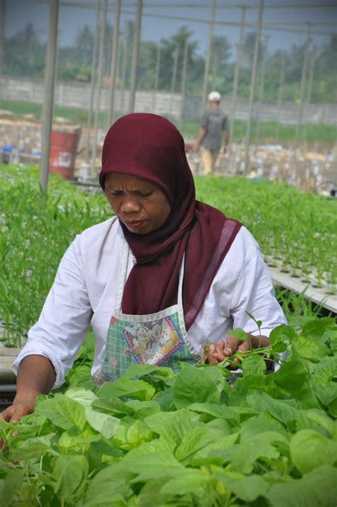 Jual Pupuk Organik Cair Hidroponik tanaman hidroponik organik tanamanbaru