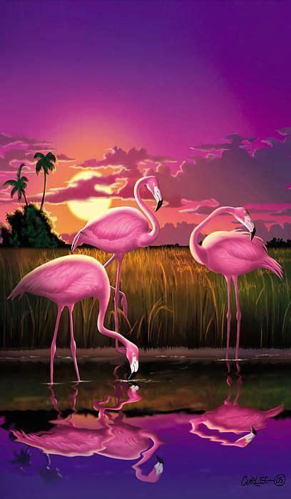 Flamingo Sunset flamingoes flamingos tropical sunset landscape florida