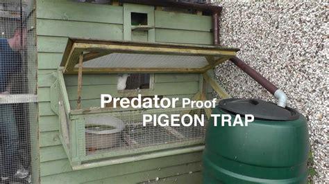 Pigeon Trap Door Design by Clever Pigeon Loft Trap Door Design Doovi