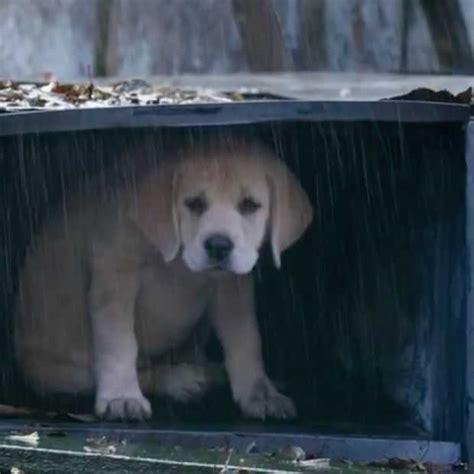 budweiser puppy commercial budweiser s puppy commercial gaat viral