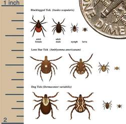 Do Bed Bugs Bite Cats Tick Bite Reactions Pictures Symptoms Amp Treatment