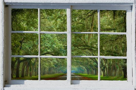 window with a view wall mural window self adhesive savannah live oak