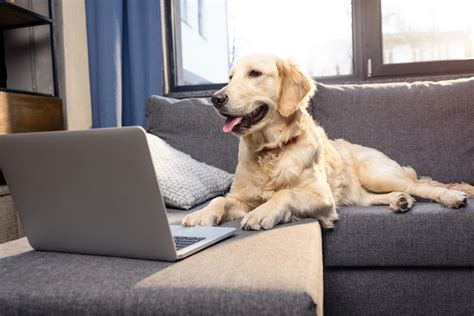 can golden retrievers stay in apartments 10 reasons to stay in a fully furnished apartment so happi together