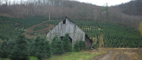 christmas tree farms chattanooga about us