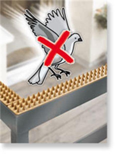 come scacciare i piccioni dal terrazzo allontanare i piccioni dal balcone casa balcone