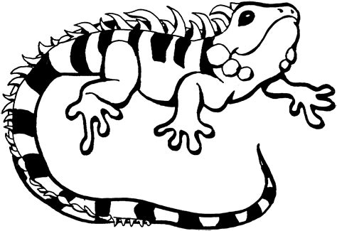 free printable coloring pages lizard free lizard coloring pages