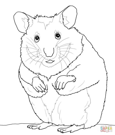 Coloring Page Hamster by Hamsters Free Colouring Pages