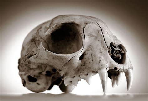 robin loznak photography skulls with seamless